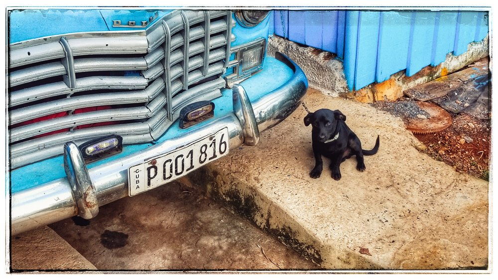 Their little puppy, Toby. He was so sweet and friendly (just like the people in Cuba).