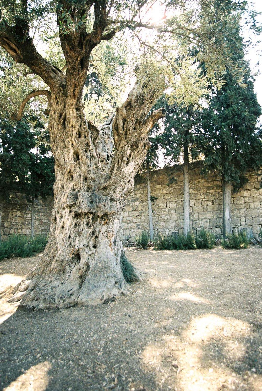 The Garden of Gethsemane by Destination Wedding Photographer Matt Erickson Photography