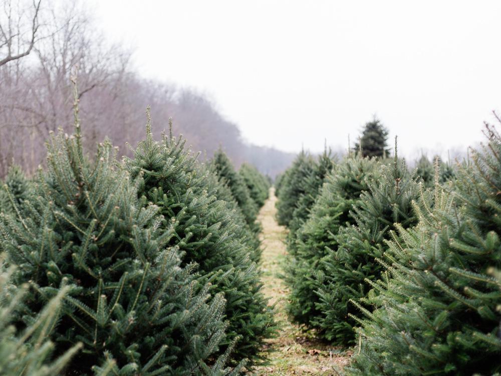 christmas-tree-farm-engagement-photos-matt-erickson-photography-1.jpg