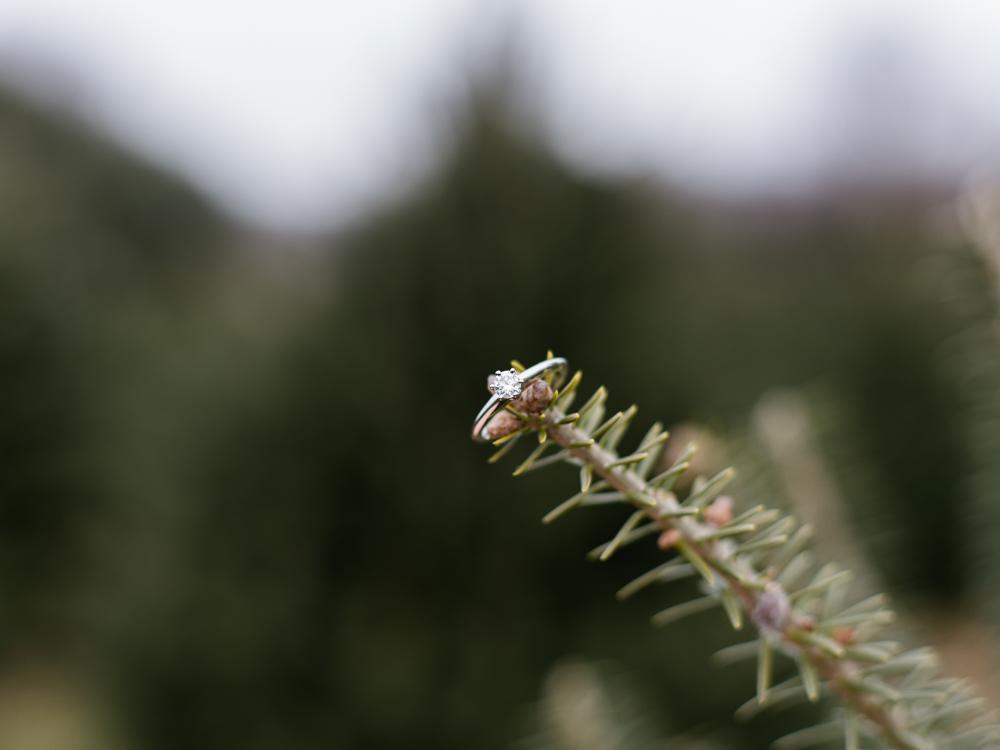 christmas-tree-farm-engagement-photos-matt-erickson-photography-37.jpg