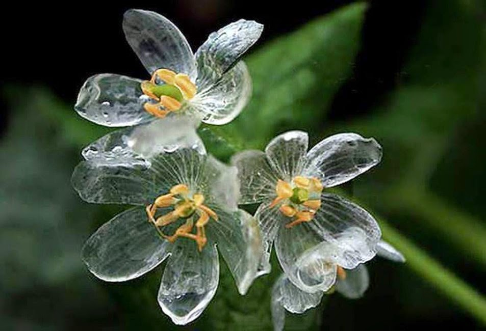skeleton-flower.jpg