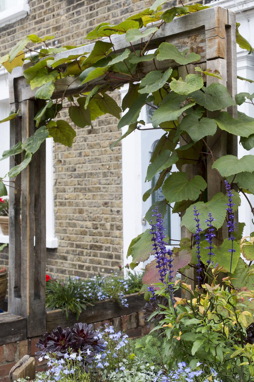 Propagating Dan Garden Design Peckham Front Yard