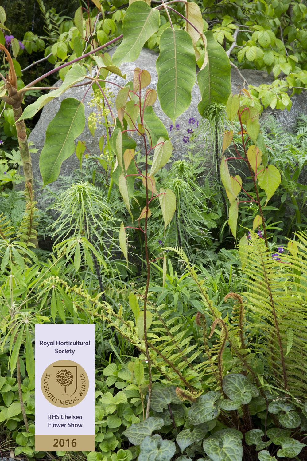 Propagating Dan Garden Design Chelsea Flower Show