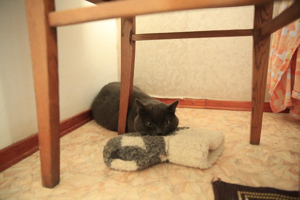 Cat keeps warm with woolen sock.