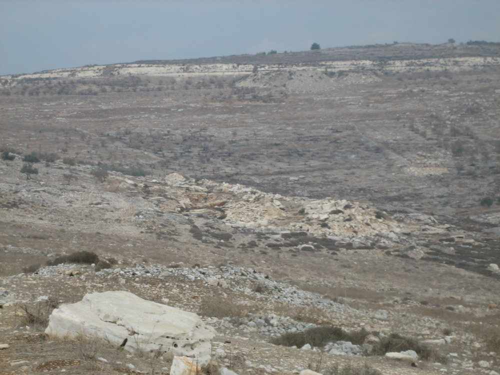 Een verbrande olijfgaard in Far'ata