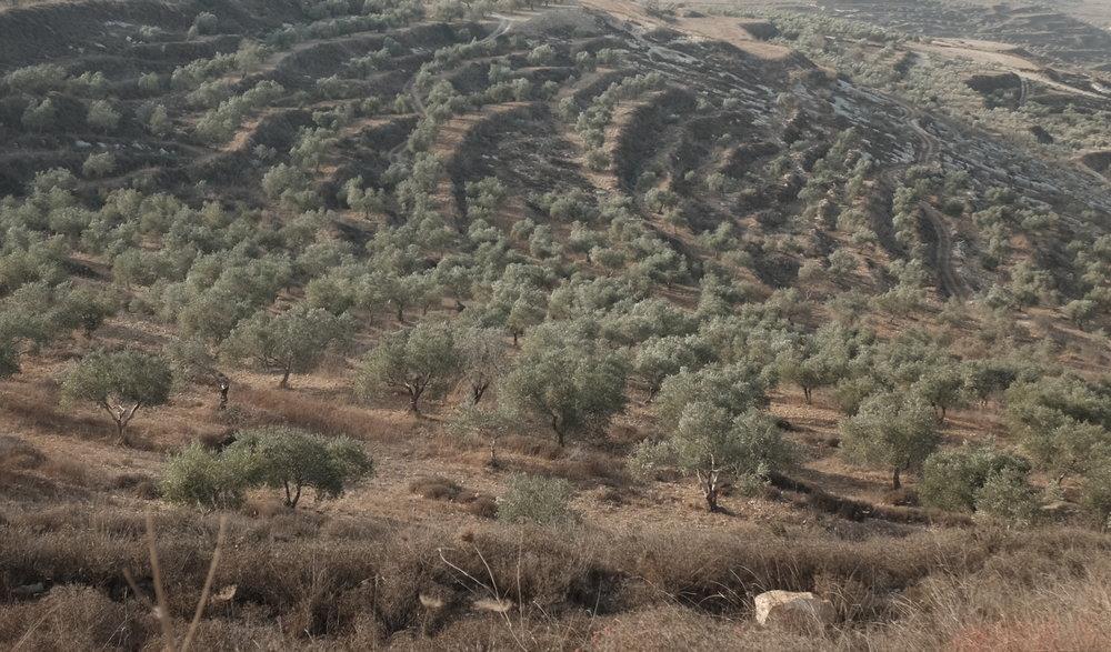 300 bomen.JPG