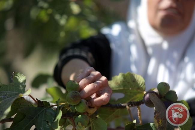 druivenstokken.jpg
