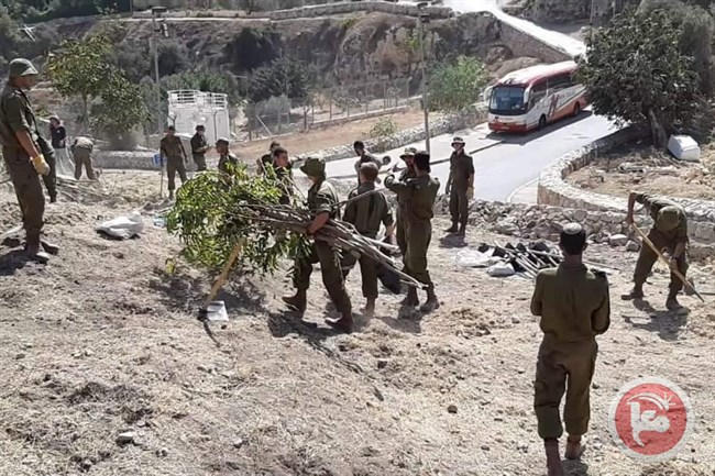soldiers uproot trees Jlem.jpg