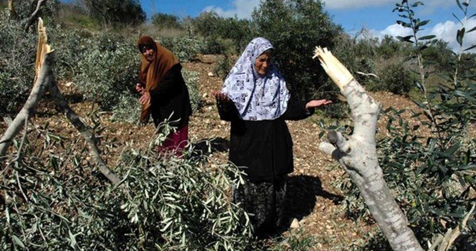 Foto: Jenin  Palestinian Information Center