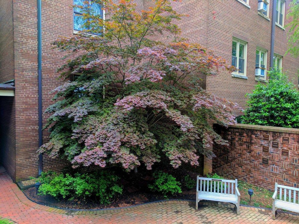 Memorial Garden. Tree.jpg