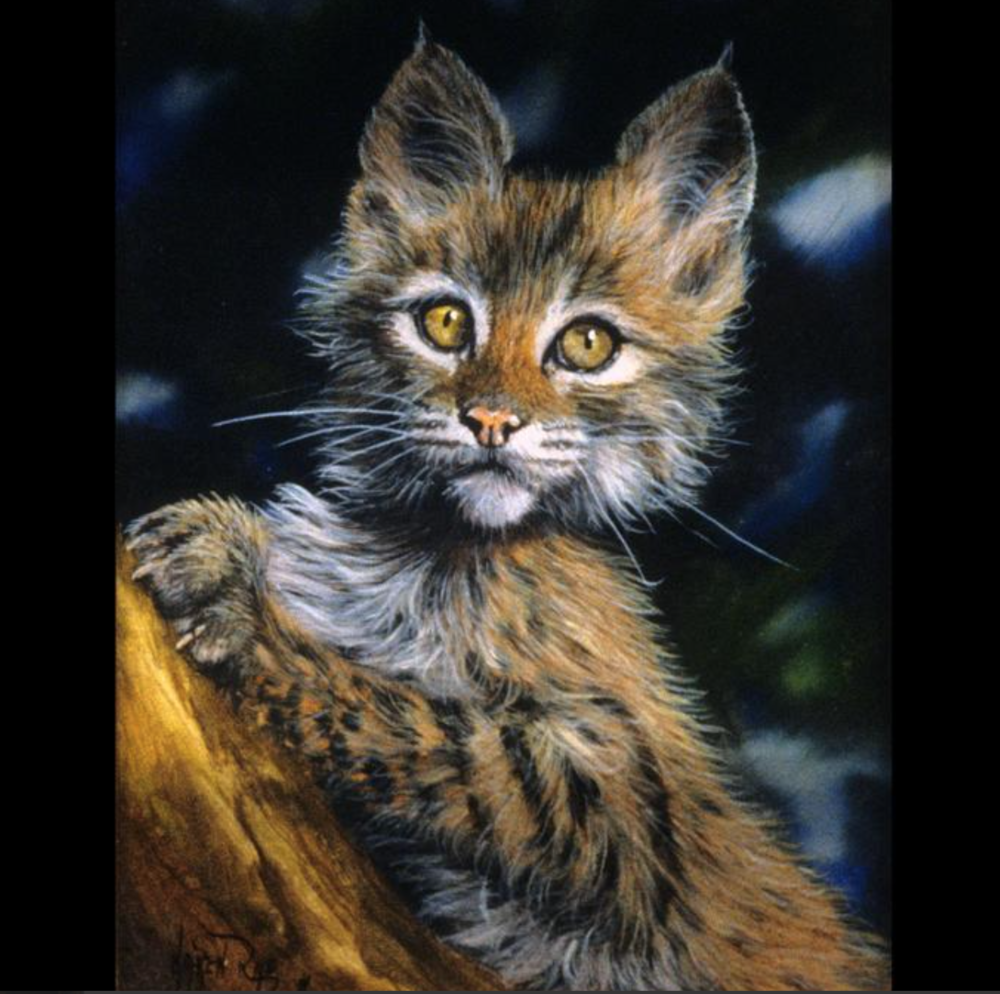 Steven Boyd - Original paintings in oil and acrylic on canvas or board of western and wildlife