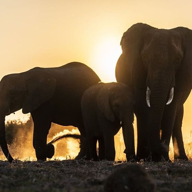 A humble reminder that we share this world with awe inspiring creatures. Let's continue to foster wonder for generations to come.  Photo: @beverlyjoubert. .⠀ .⠀ .⠀ .⠀ .⠀ .⠀ .⠀ #justgoshoot #peoplescreatives #sustainability #environment #innovation #climatechange #business #economy #calledtobecreative #entreprenuerspirit #stayandwander #elephants #mountains #livefolk #imaginebetter #preserve #profitredefined ⠀ #inspire #travel #africa #tech #agency #ourplanetdaily #liveauthentic #theoutbound #exploretocreate #lifeofadventure #roamtheplanet #modernoutdoors #lf10k