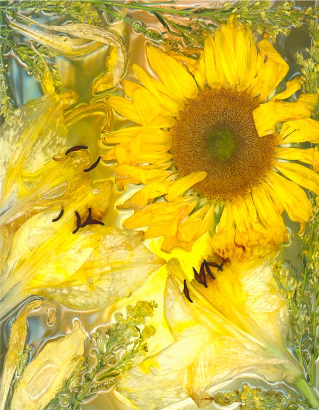 Shirley's Sunflower