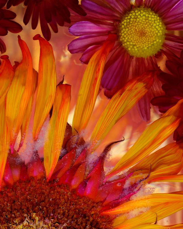 Exuberant Orange Petals