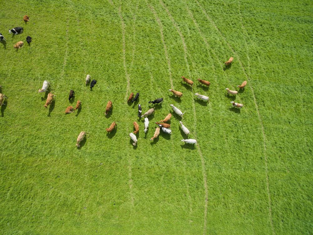 Crop and Livestock Monitoring -