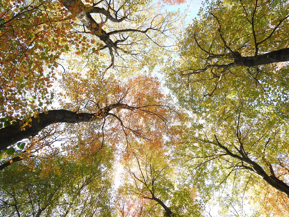 canopy of color and light - Light Hardwood Canopy 2016