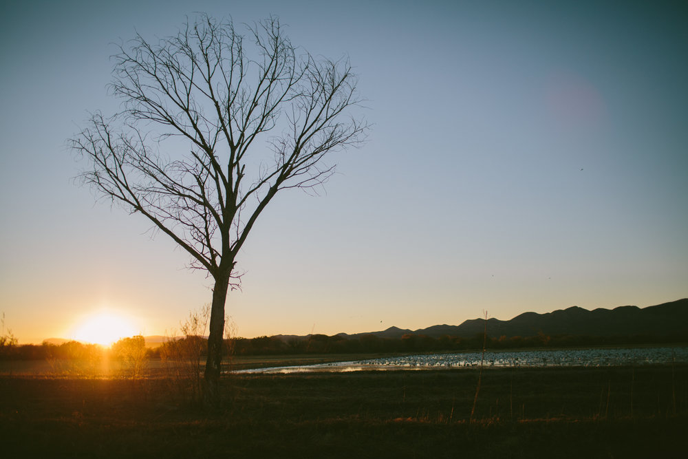Sunset at Bosque del Apache ©CocoBetty