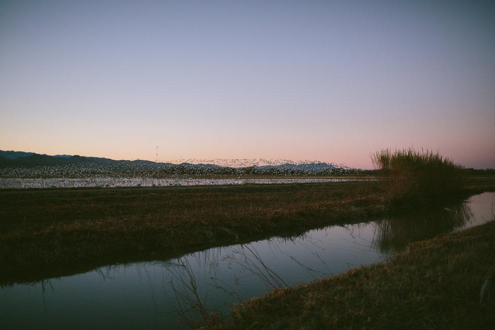 Bosque-7.jpg