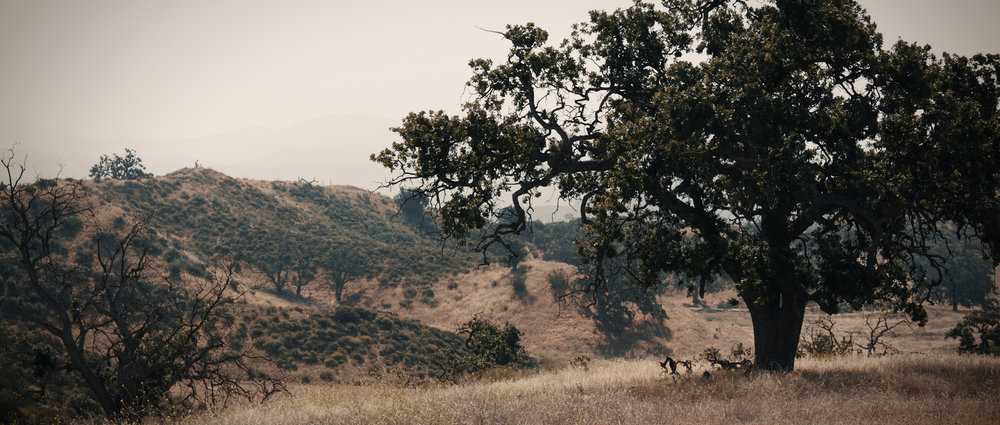 Big Sky Ranch 2.jpg