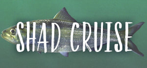 shad-cruise_orig.jpg