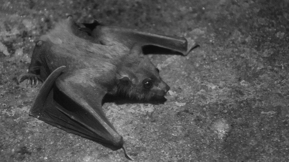 small-bat.jpg