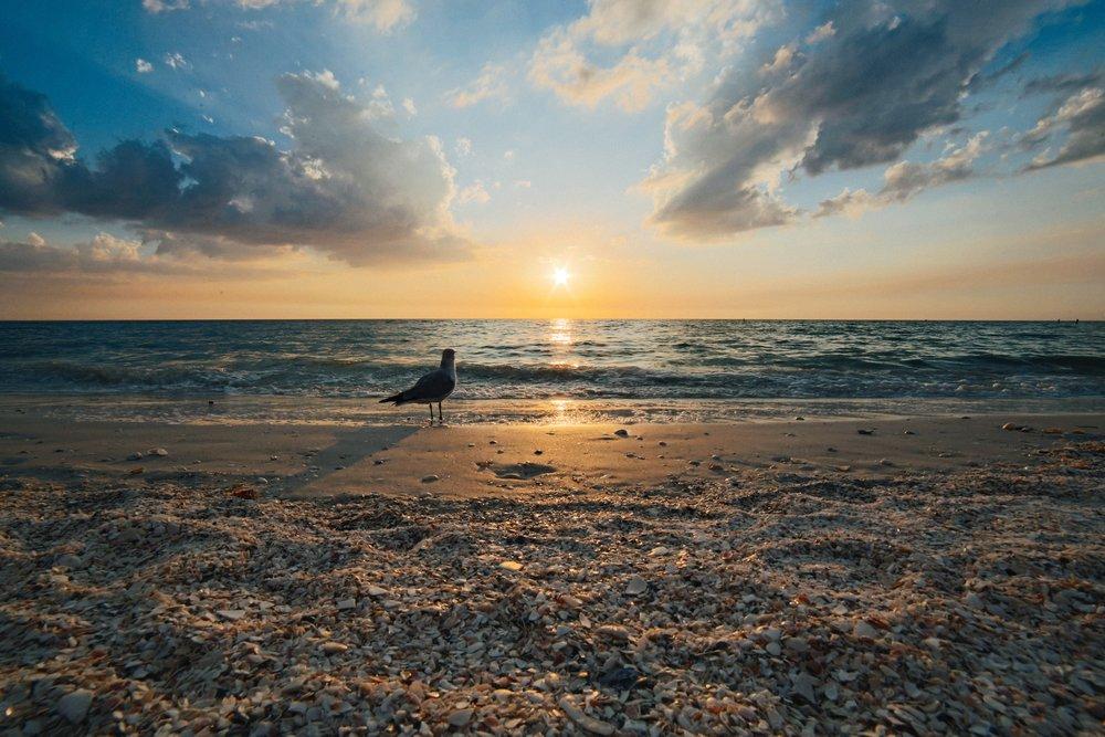 beach-clouds-dawn-316800.jpg