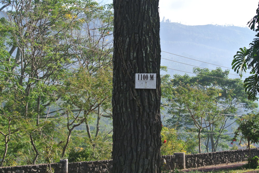 A sign posted on the tree right outside the guest house.