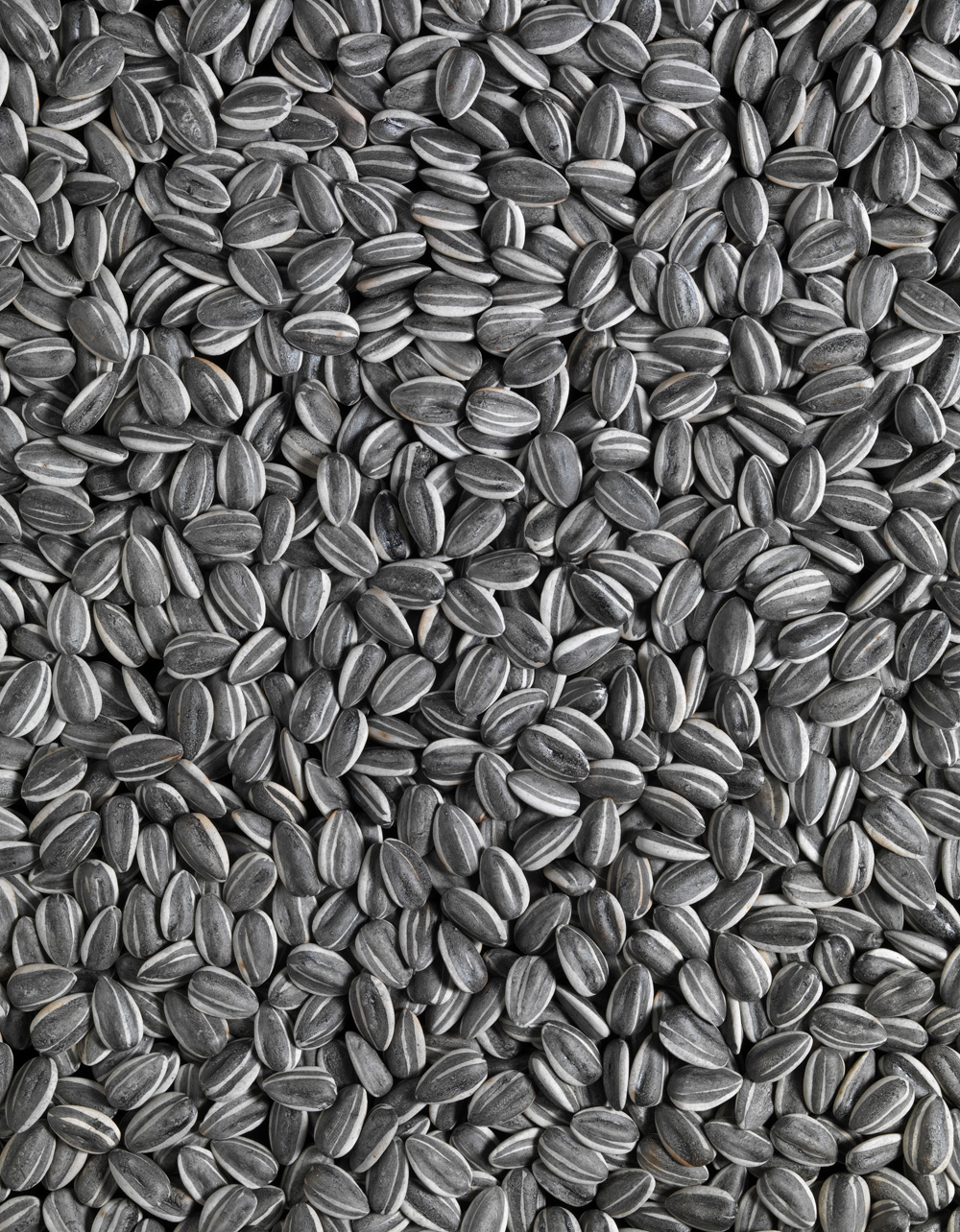 AWW_SunflowerSeeds_PhotoCreditTate1_2010.jpg