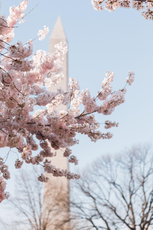DCCherryBlossoms-15.jpg