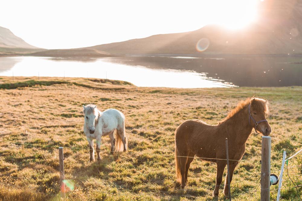 Iceland Wedding | Andrea Rodway Photography