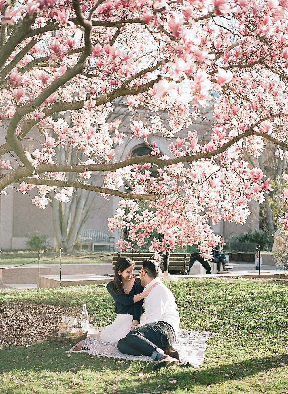 DC Cherry Blossom Engagement   Andrea Rodway Photography