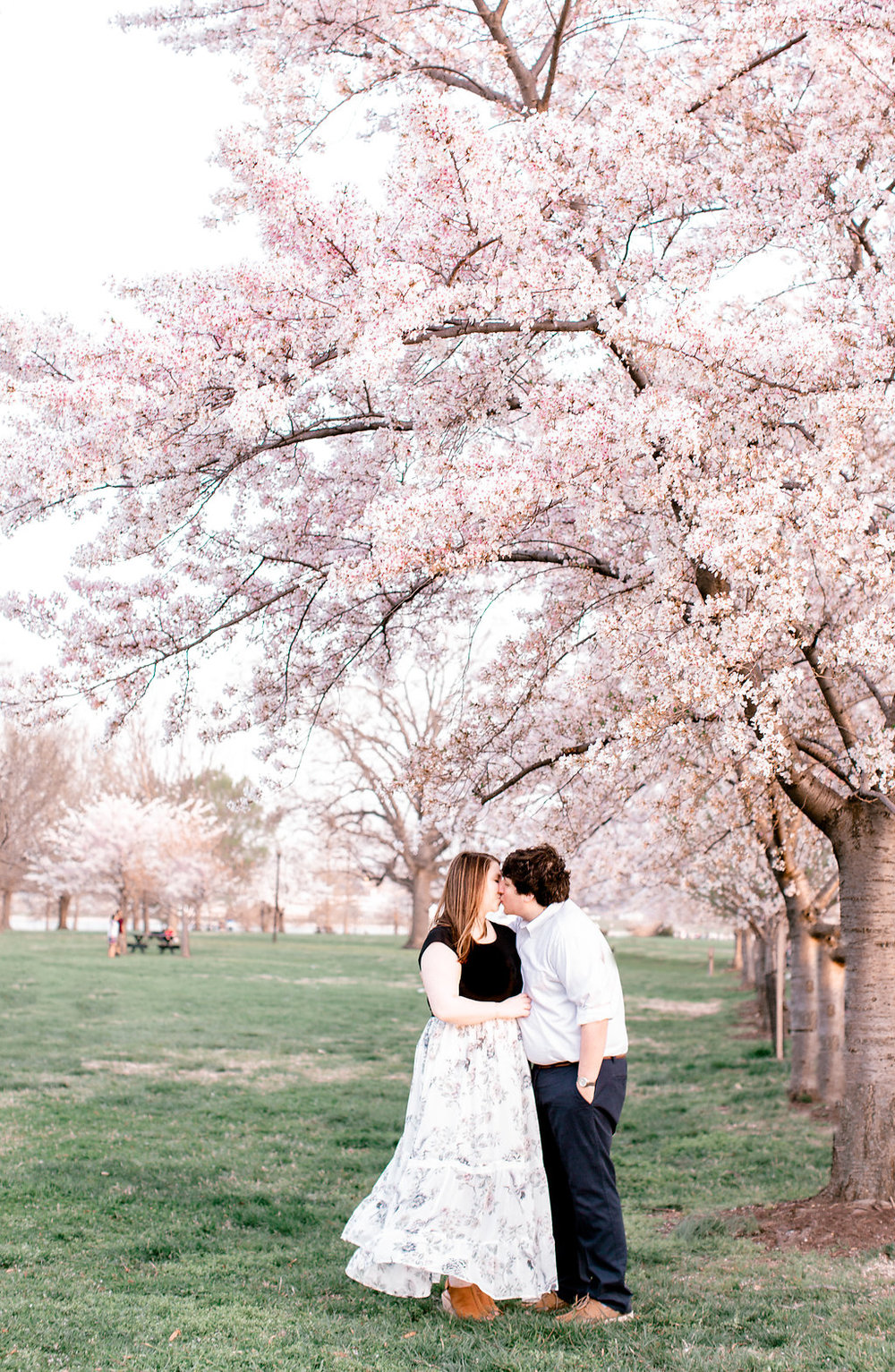 Hains Point Cherry Blossom Engagement Photography   Washington, D.C.   Andrea Rodway Photography