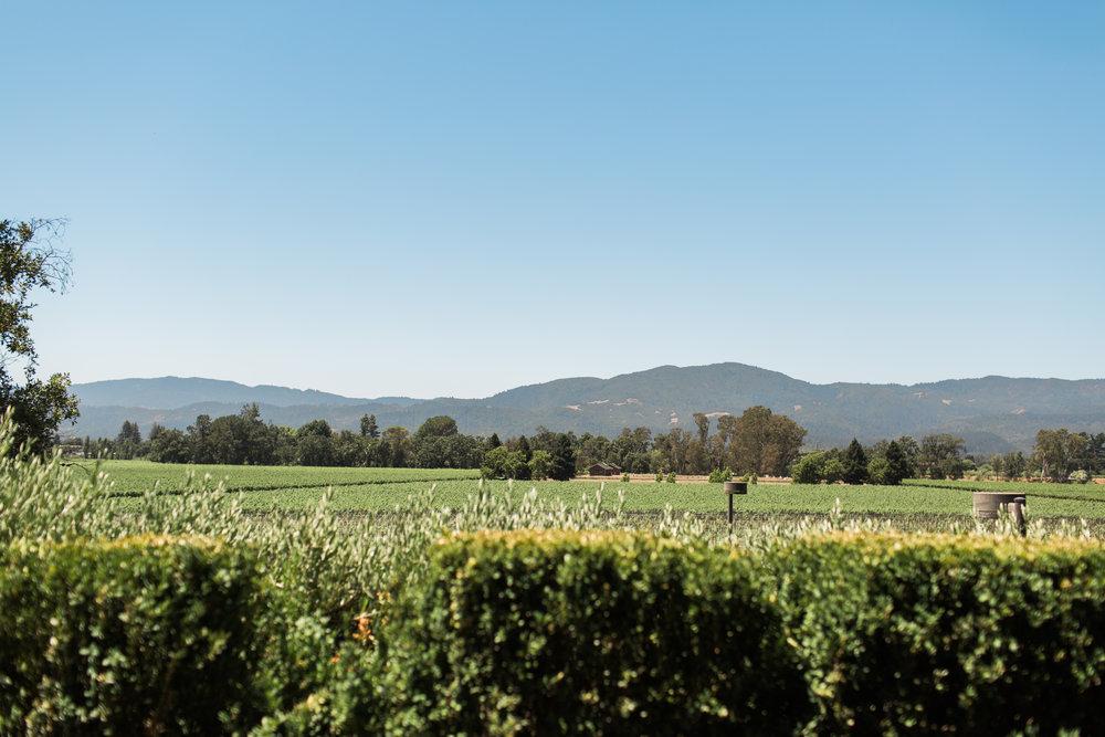 Wanderlust California: Napa Valley Mumm Vineyard