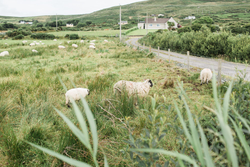Ireland (96 of 185).jpg