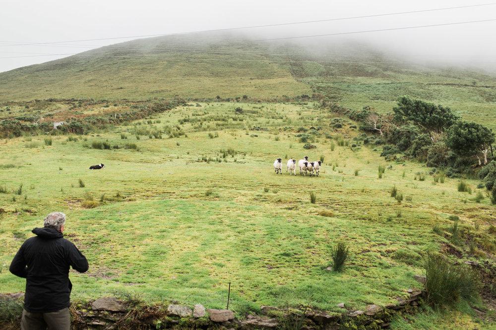 Ireland (125 of 185).jpg