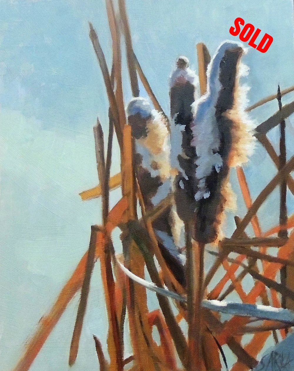 Cattails in Snow