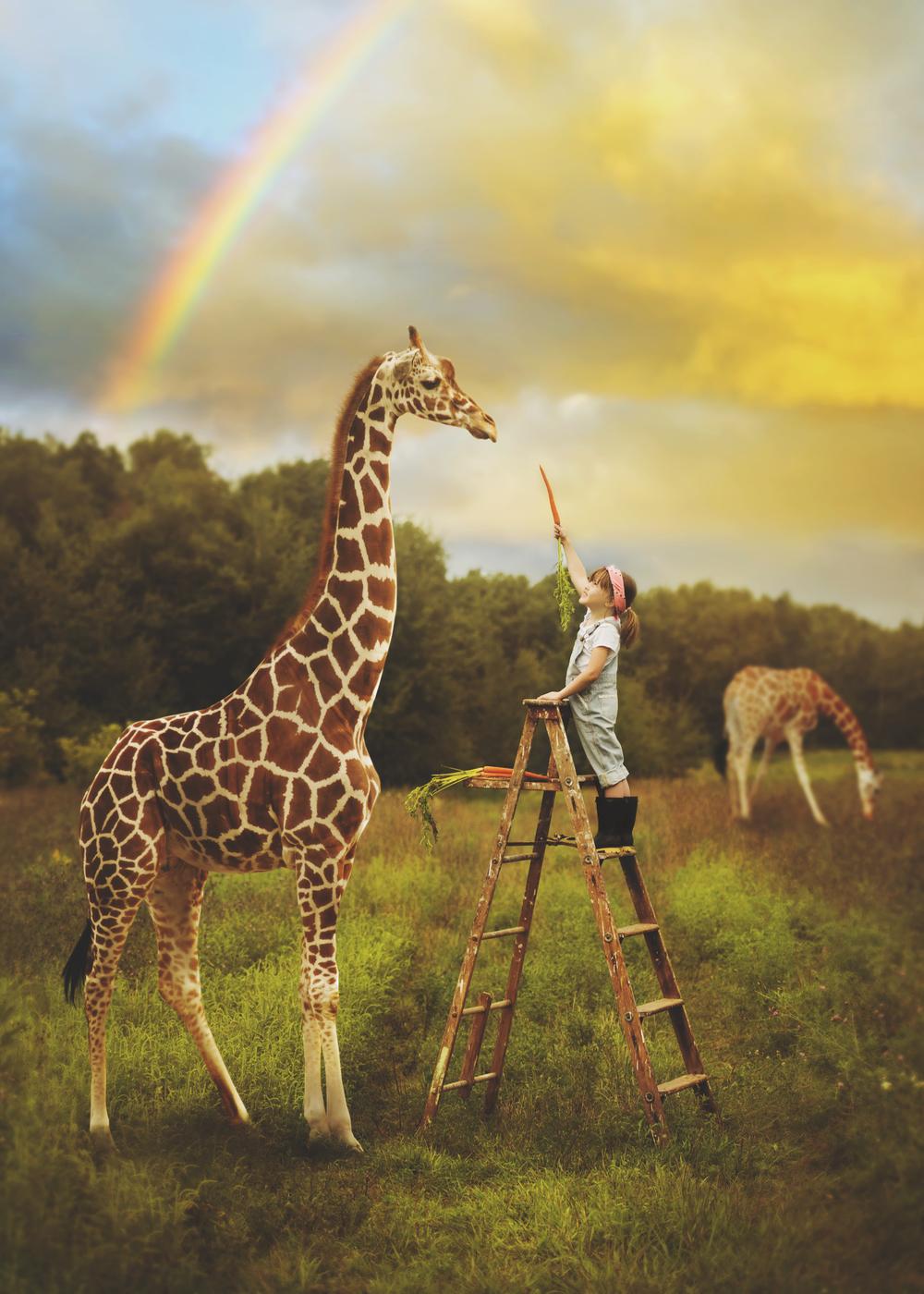 giraffe_karley.jpg