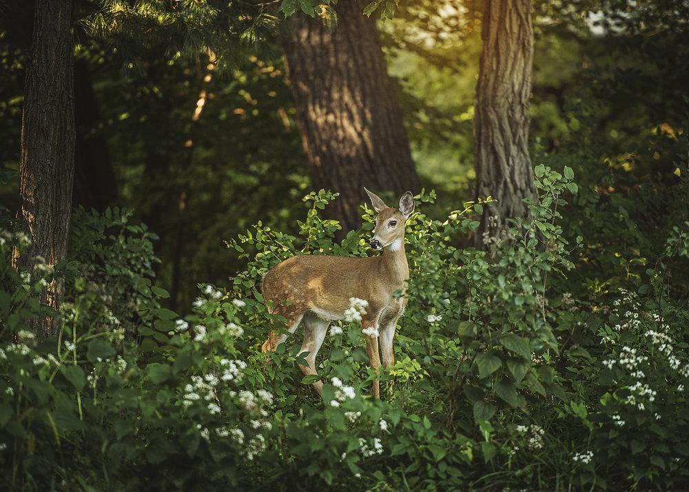 Bambi01_FB.jpg