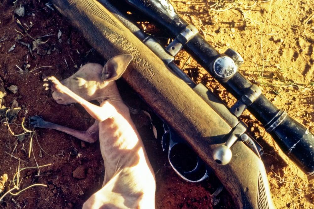 Outback019-2.jpg