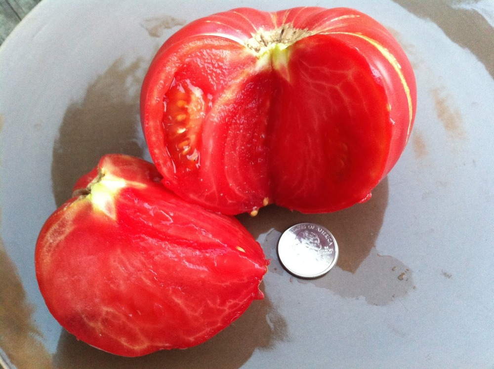 Tomatoes - Red/Pink