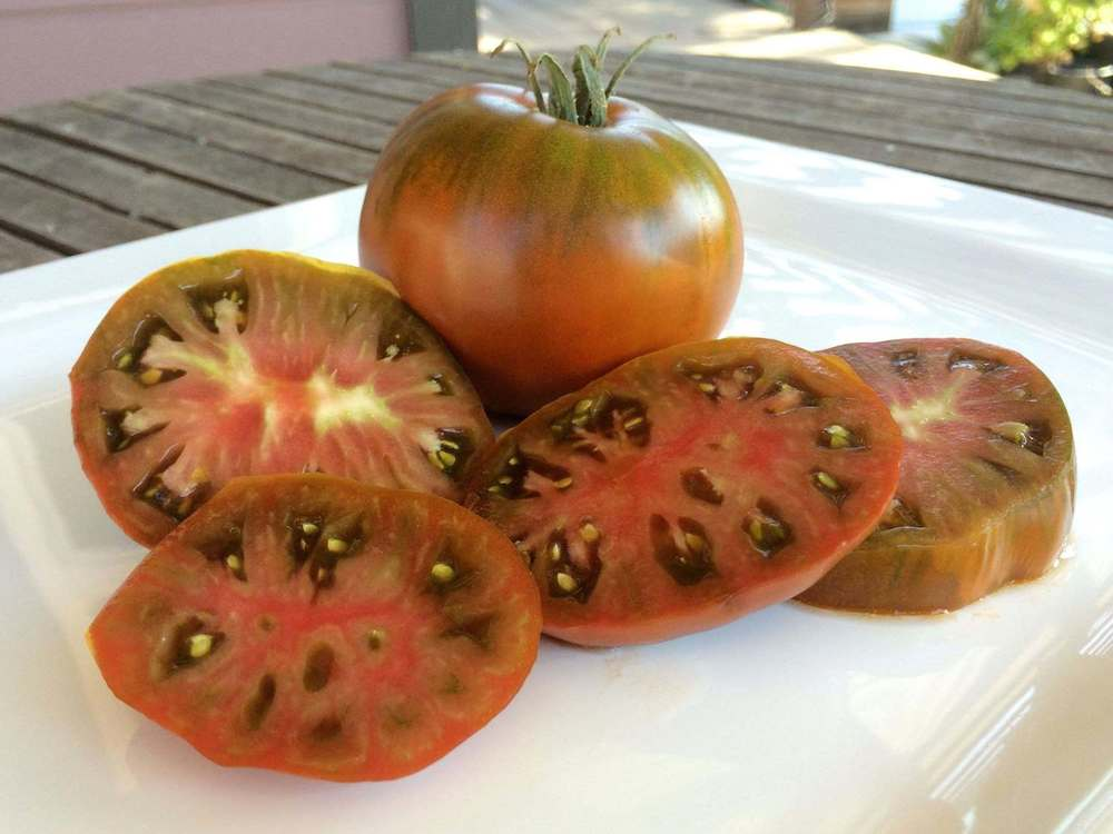 Tomatoes - Blue/Black