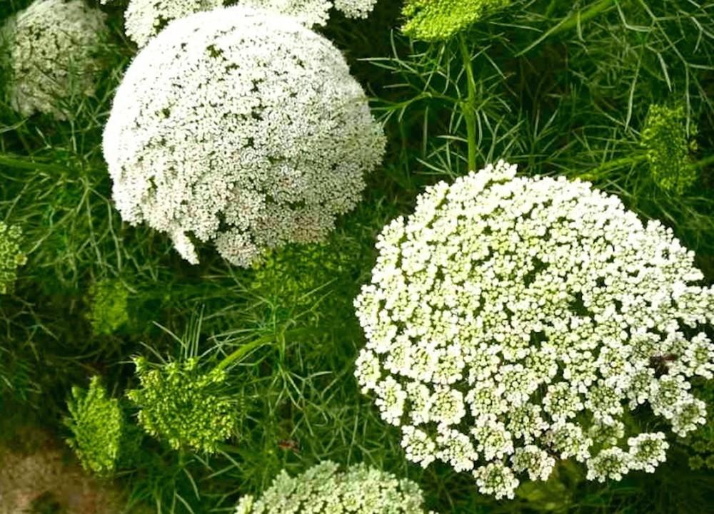 Herbs/Beneficials