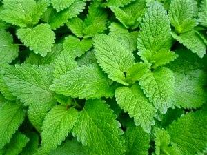 Herbs and Beneficials — Biota Gardens