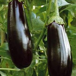 Diamond Eggplant-250.jpg