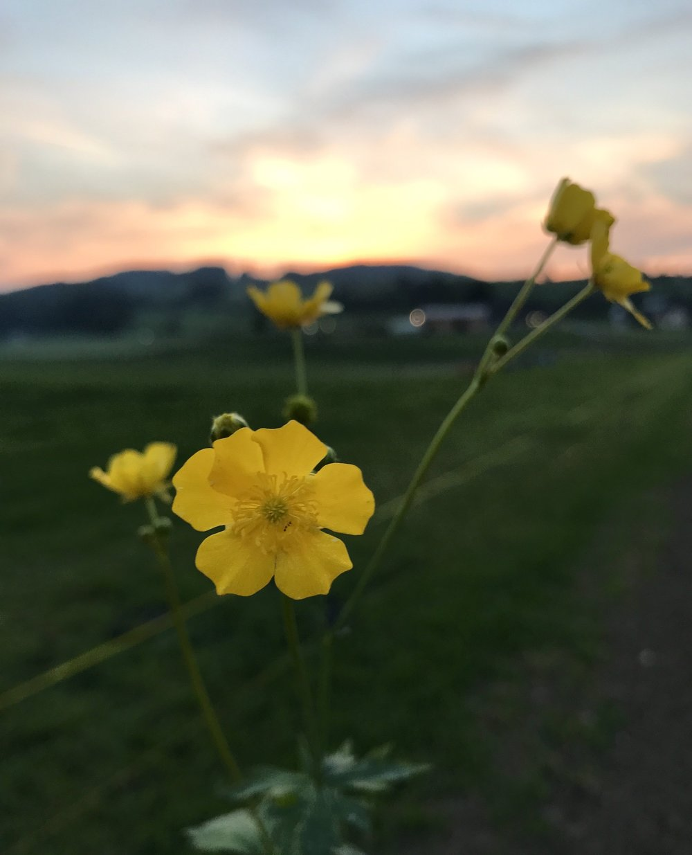 The end of the day, Wuppenau, Switzerland.