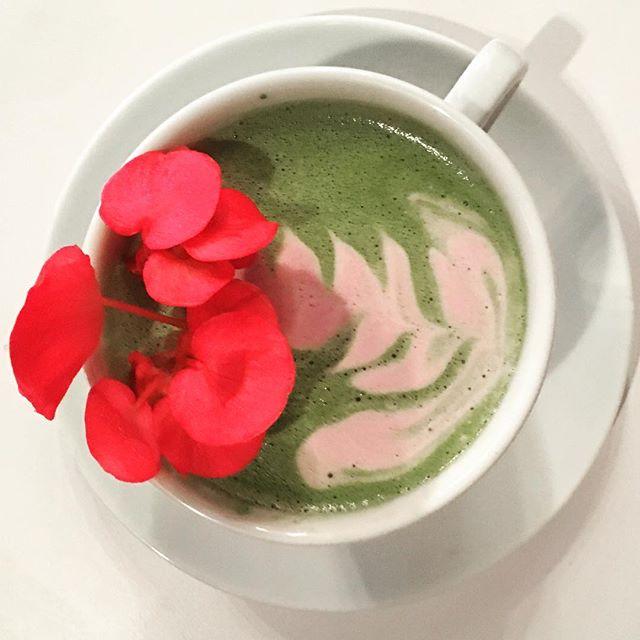 Blueberry Matcha Latte @elizard______ @bridge_span_14 #denver #coffeehouse