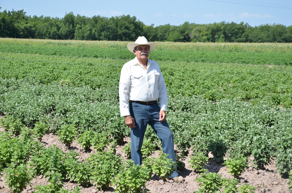 Don Pablo Hoffmann in his fields, near Meoqui, Chihuahua. June 2014.