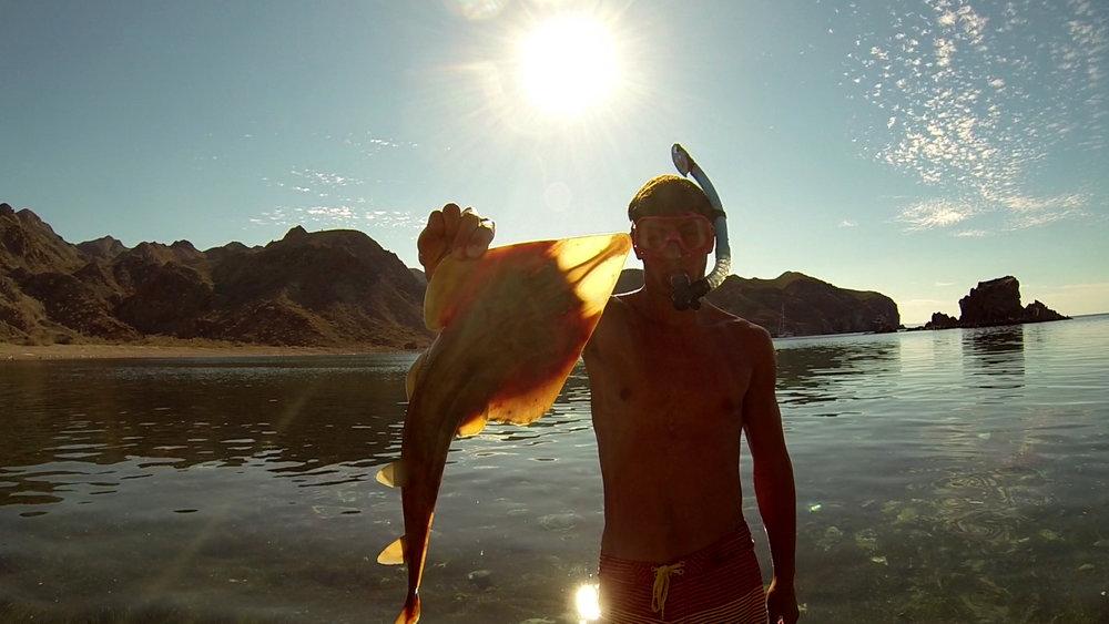 Guitarfish.jpg