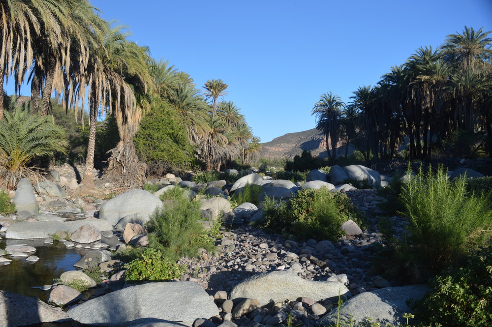 Oasis near Santa Gertrudis Mission