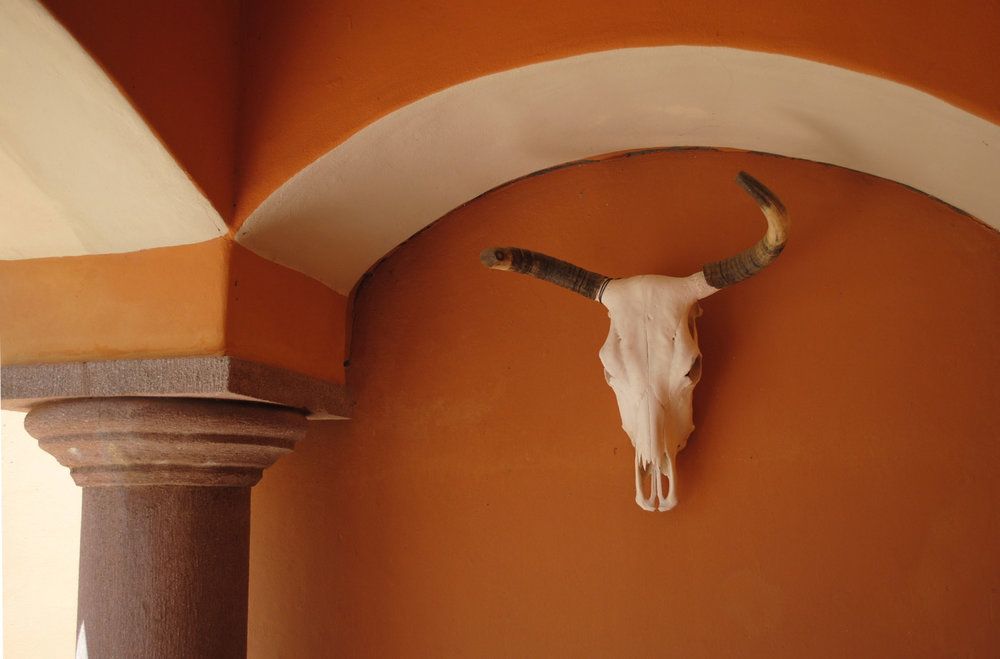 Steer skull on the entryway.